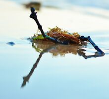 Just twigs and seaweed by Damien Scrivano