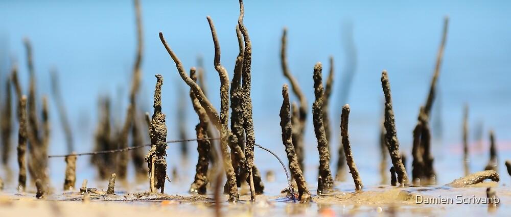 They Grow  by Damien Scrivano