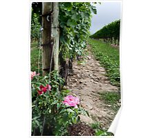 A Rose in the Vineyard Poster