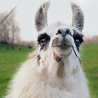 Wookie Llama by Jeanne Sheridan