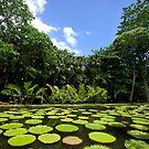 Mauritius - Pamplemousses Botanic Gardens by mattnnat