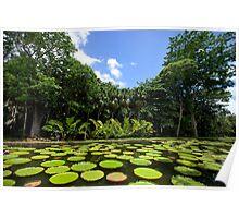 Mauritius - Pamplemousses Botanic Gardens Poster