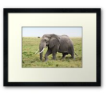 Bull Elephant Following the Herd, Amboseli, Kenya Framed Print