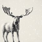 winter moose by beverlylefevre