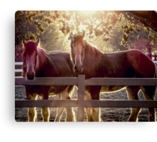 Early Morning Beauty (Views: 548) Canvas Print