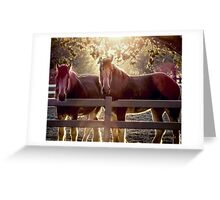 Early Morning Beauty (Views: 548) Greeting Card