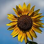 Sun's flower by PhotosByHealy