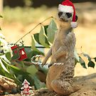Merry Meerkat by Larry3