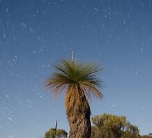 Balga Tree Stars by Adrian Young
