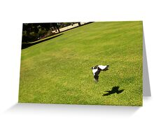 The Money Shot - Magpie In Flight College Park Greeting Card