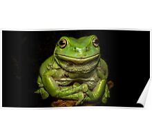 Portrait Of A Green Tree Frog Poster
