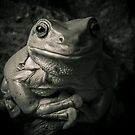 Portrait Of A Green Tree Frog B&W by Kerrod Sulter