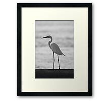 Birds of Sunshine Coast Framed Print
