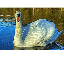 Rydal Swan Photographic Print