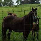 Mare and Foal by Nathan Barlow