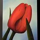 Red Tulip by Patrick  McMullen