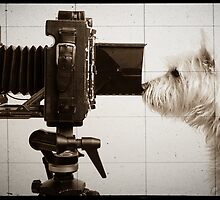 Vintage Pho Dog Grapher with View Camera by Edward Fielding
