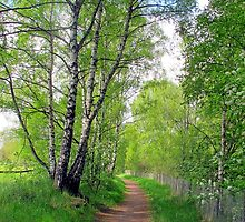 Summer Birches in Stockholm by Susan Wellington