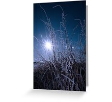 icy twigs and branches in snow against blue dawn Greeting Card