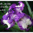 Iris by Elaine Game