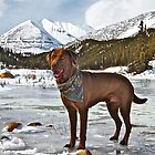 Moose The Retriever by Chris  Gale
