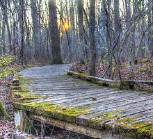 Mossy Boardwalk II  by Rich Fletcher