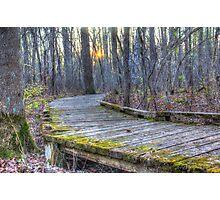 Mossy Boardwalk II  Photographic Print