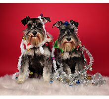 Christmas Pups Photographic Print