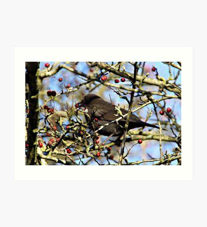 BLACK BIRD EATING . Art Print
