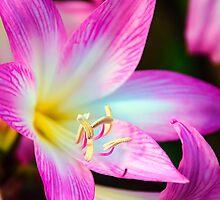 Eden Flower by Jon OConnell