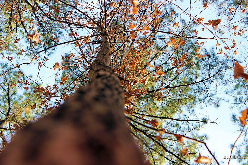 Always Look Up by aprilann
