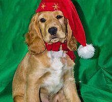 Bramble's Christmas by JEZ22
