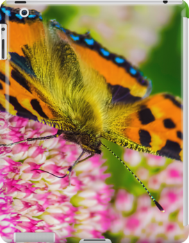 Small Tortoiseshell Butterfly by Jon OConnell