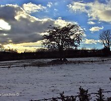 Winter Landscape, Cultra. by Laura Butler