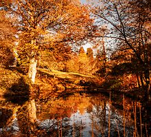 Autumnal View by Scott Anderson