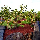 The Prickly Pears Of Lanzarote by Fara