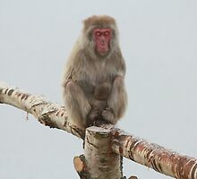 One Wise Monkey by jd-photography