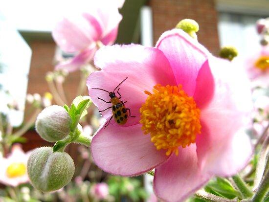 Asian ladybug rising by MarianBendeth