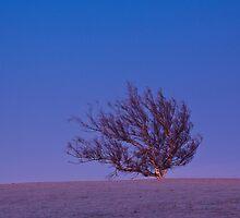 Dawn on a Frosty Tree by Tony White