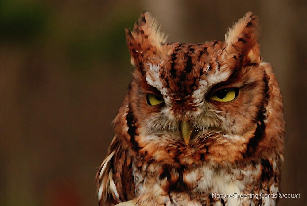 Eastern Screech Owl by NatureGreeting Cards ©ccwri