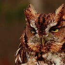 Momma Told Me There Would Be Days Like This! Eastern Screech Owl by NatureGreeting Cards ©ccwri
