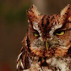 Eastern Screech Owl by NatureGreeting Cards ©ccwri