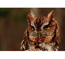 Eastern Screech Owl Photographic Print