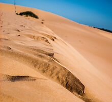 Sandhill Symetry by Candice84