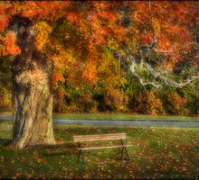 The Tree by Don  Powers