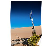 Spring in the Sand Dunes Poster