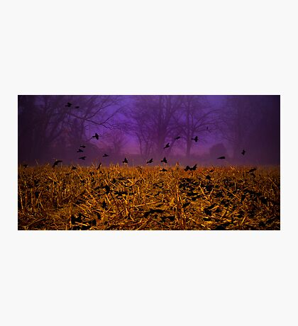 Crows of Black Friday Photographic Print