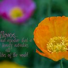 Poppy - Quotation by Kiarn