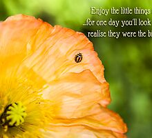 Poppy Ladybug - Quotation by Kiarn