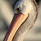 &quot;Pelican Portrait&quot; by jonxiv